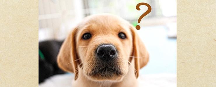 不明瞭な料金に疑問を抱く犬